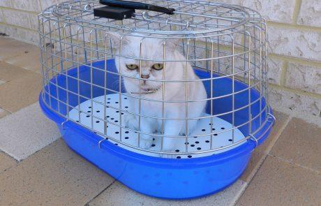 Katze Tierarztpraxis Brockhaus Hattingen
