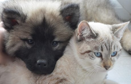 dog-cat-