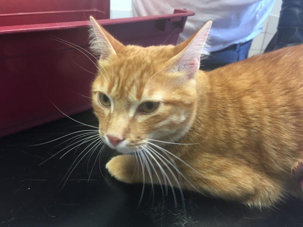 Charly - Katze Tierarztpraxis Dr. Brockhaus
