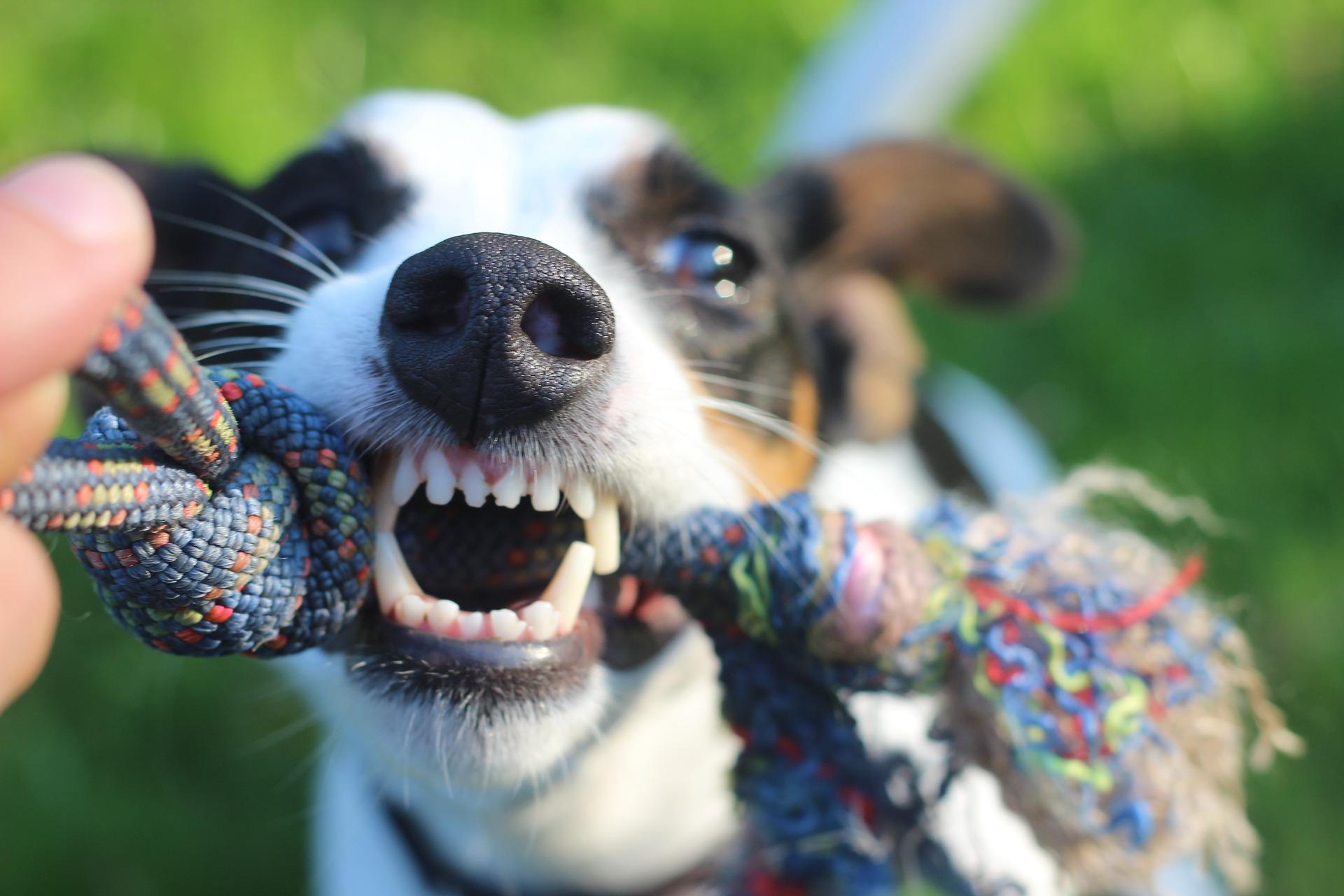 Hund Zahnhygiene Tierarztpraxis Hattingen