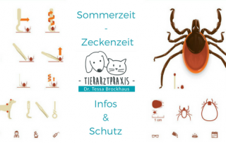 Sommerzeit - Zeckenzeit: wichtige Informationen zum Thema Zecken, Erkrankungen und Schutzmaßnahmen von Tierarzt Dr. Brockhaus in Hattingen