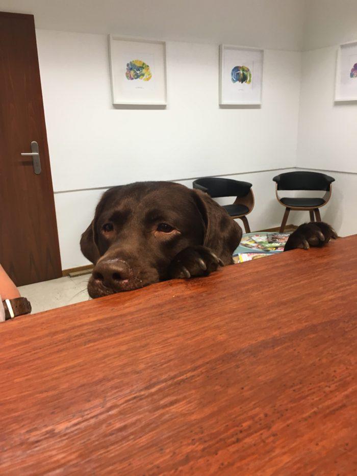 Apollo in der Tierarztpraxis Dr. Brockhaus