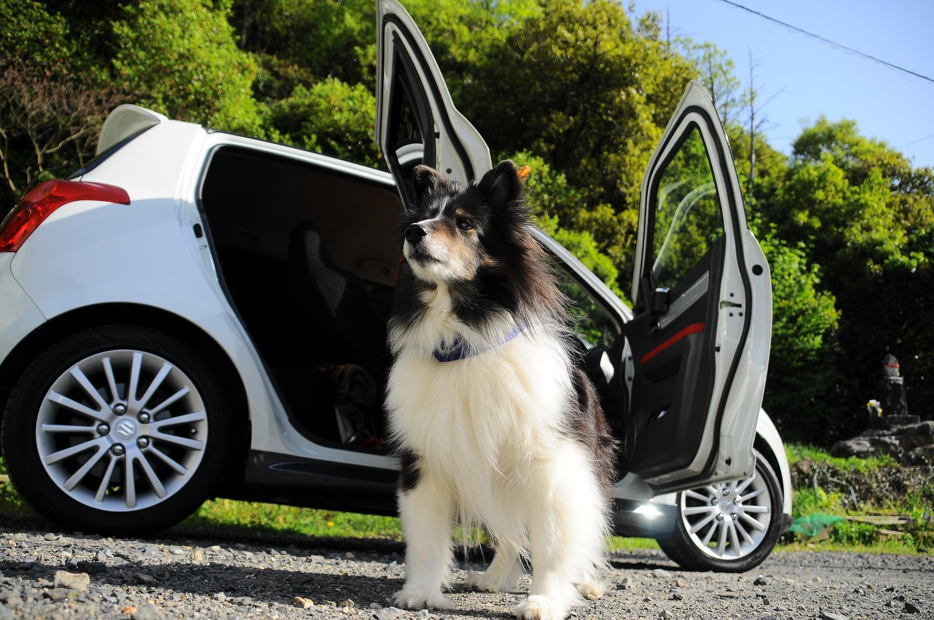 Hunde Hitze Auto - Tierarzt Dr. Brockhaus