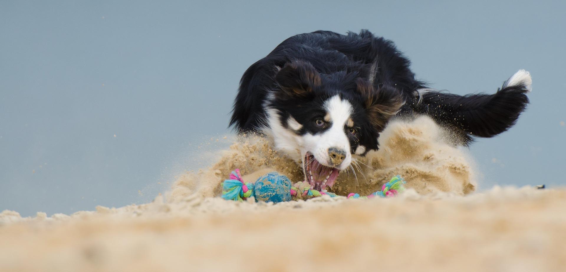 Baden mit dem Hund: So wird der Strandurlaub für Mensch & Hund zum ungetrübten Vergnügen
