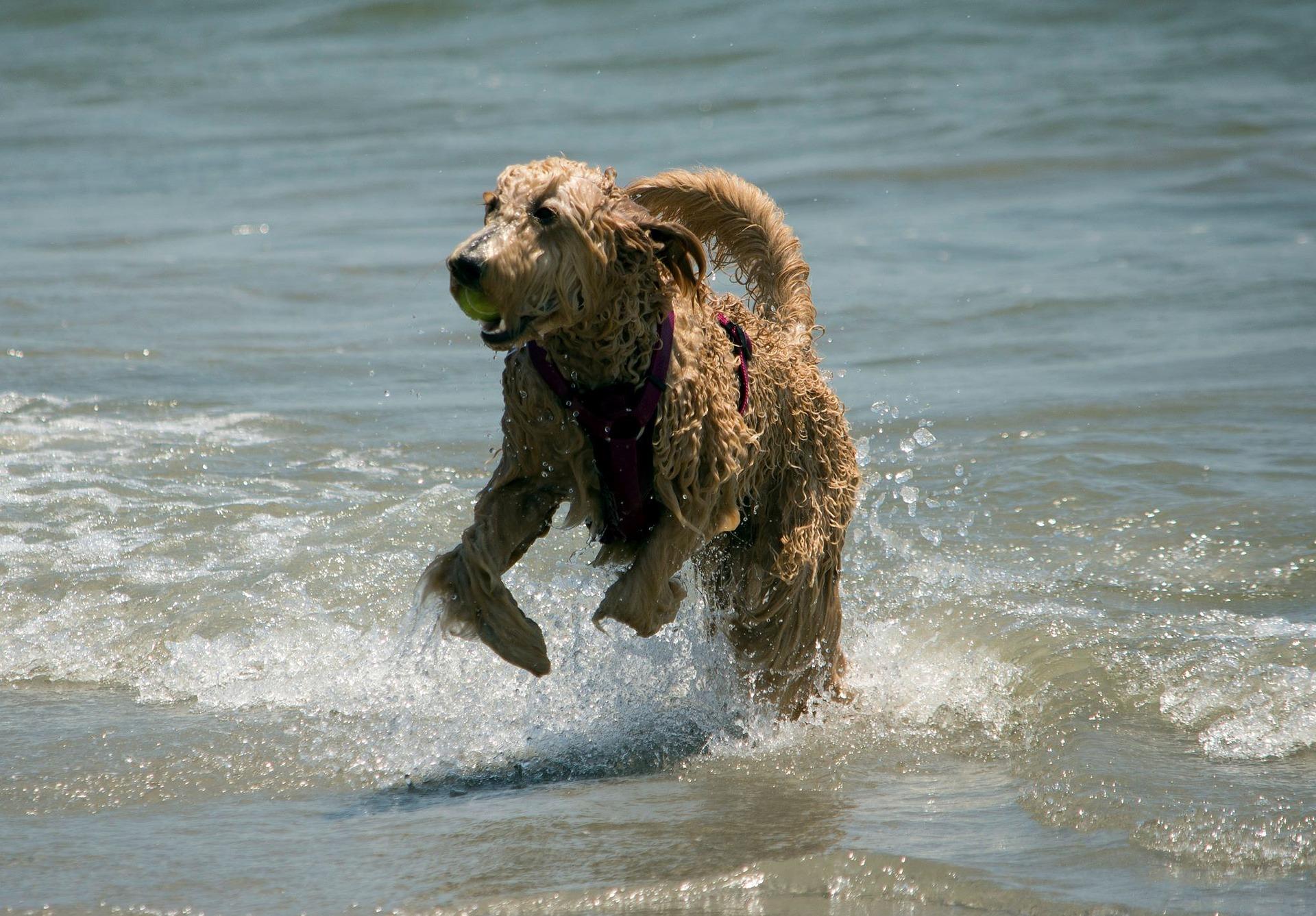 Baden mit dem Hund – Worauf Sie achten sollten