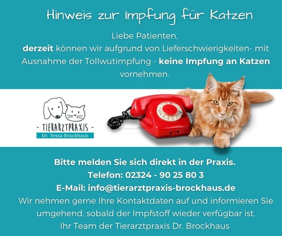 Tierarztpraxis Dr. Brockhaus in Hattingen - Hinweis Katzen impfen 09.2021