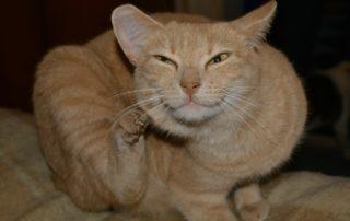 Flöhe, Parasiten bei Hund und Katzen - Tierarzt Dr Brockhaus in Hattingen
