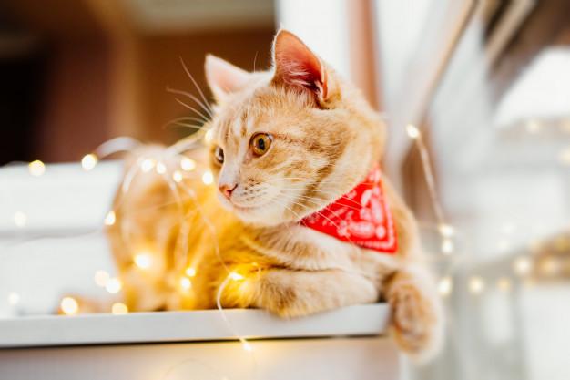 Katze Hund Geschenkband Gefahr - Tierarzt Dr Brochkaus in Hattingen
