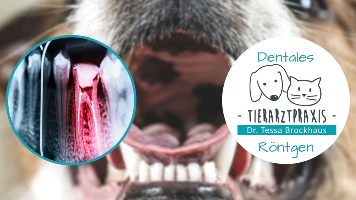 Dentales digitales Röntgen Tierarzt Dr Brockhaus in Hattingen