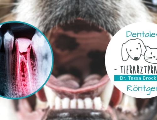 Digitales dentales Röntgen in der Tierarztpraxis