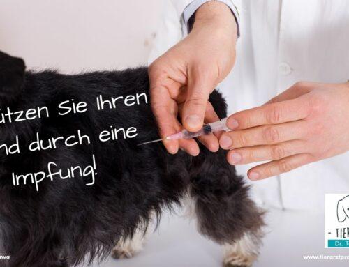 Schützen Sie Ihren Hund durch eine Impfung!  Tödliches Virus breitet sich in NRW aus!