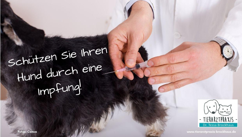 Hund Impfung