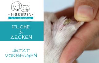 Vorsorge Flöhe und Zecken Tierarzt Brockhaus in Hattingen