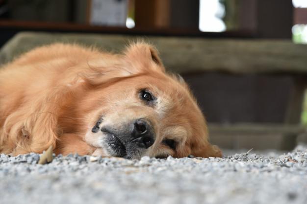 Durchfall Hund tierarzt Foto Freepik Skynetgame