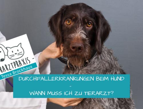 Durchfallerkrankungen beim Hund- wann muss ich zu Tierarzt?