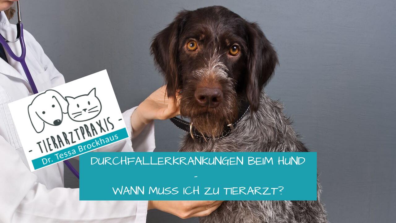 Durchfallerkrankungen beim Hund- wann muss ich zu Tierarzt_