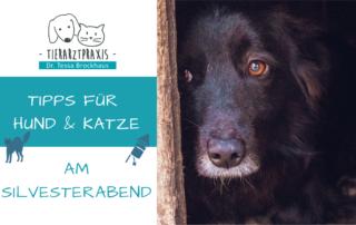 Silvester Hund Katze Tipps Tierarzt Dr. Brockhaus Hattingen