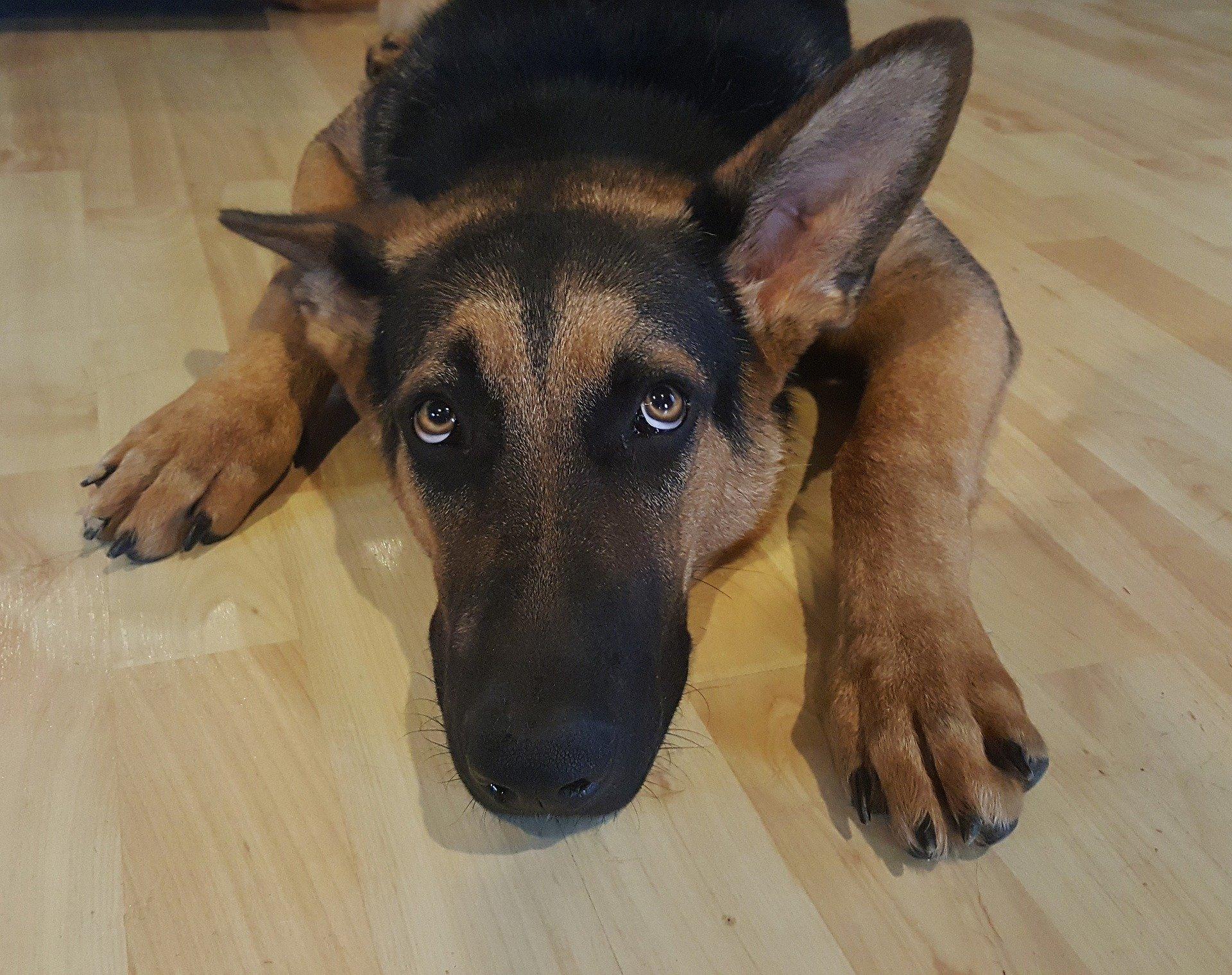 Hund Silvester Angst Hilfe Tipps Tierarzt Dr. Brockhaus Hattingen