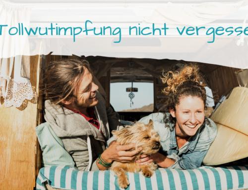 Tollwutimpfung für Hunde vor der Reise