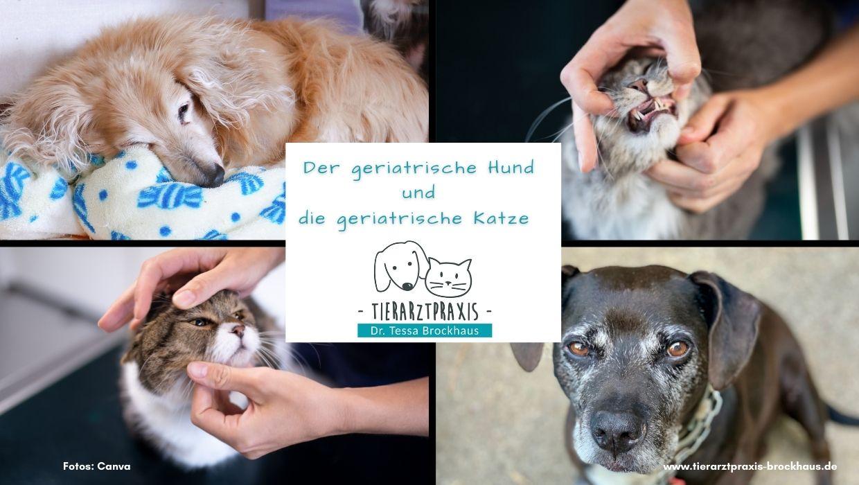 Geriatrie und Früherkennung Katzen und Hunde Tierarzt Doktor Brockhaus in Hattingen