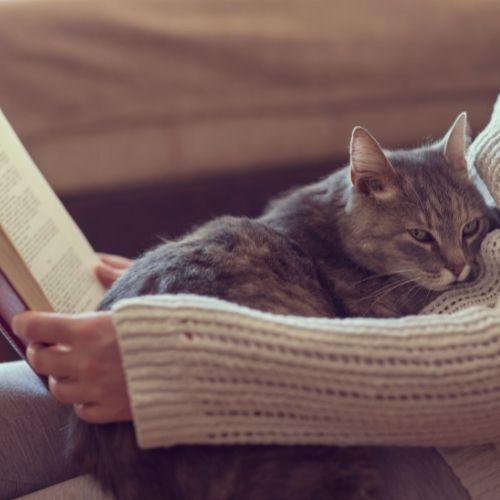 Katze alt Tierarzt