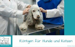 Rönten in der Tierarztpraxis Hattingen für Hunde und Katzen