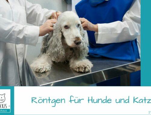 Röntgen für Hunde und Katzen