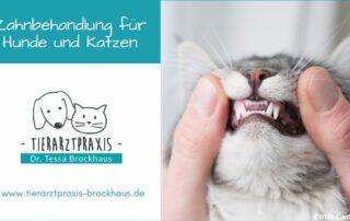 Zahnbehandlung für Hunde und Katzen in Hattingen